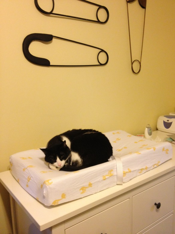 new cat bed slash changing pad